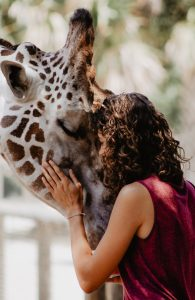 Woman and giraffe rubbing heads