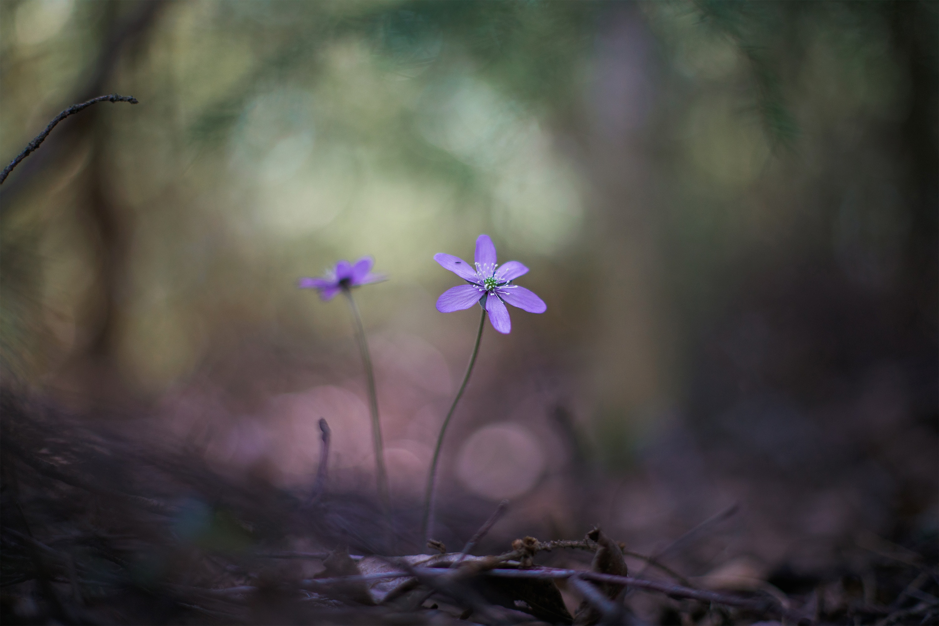 Purple flowers with barren woods in background