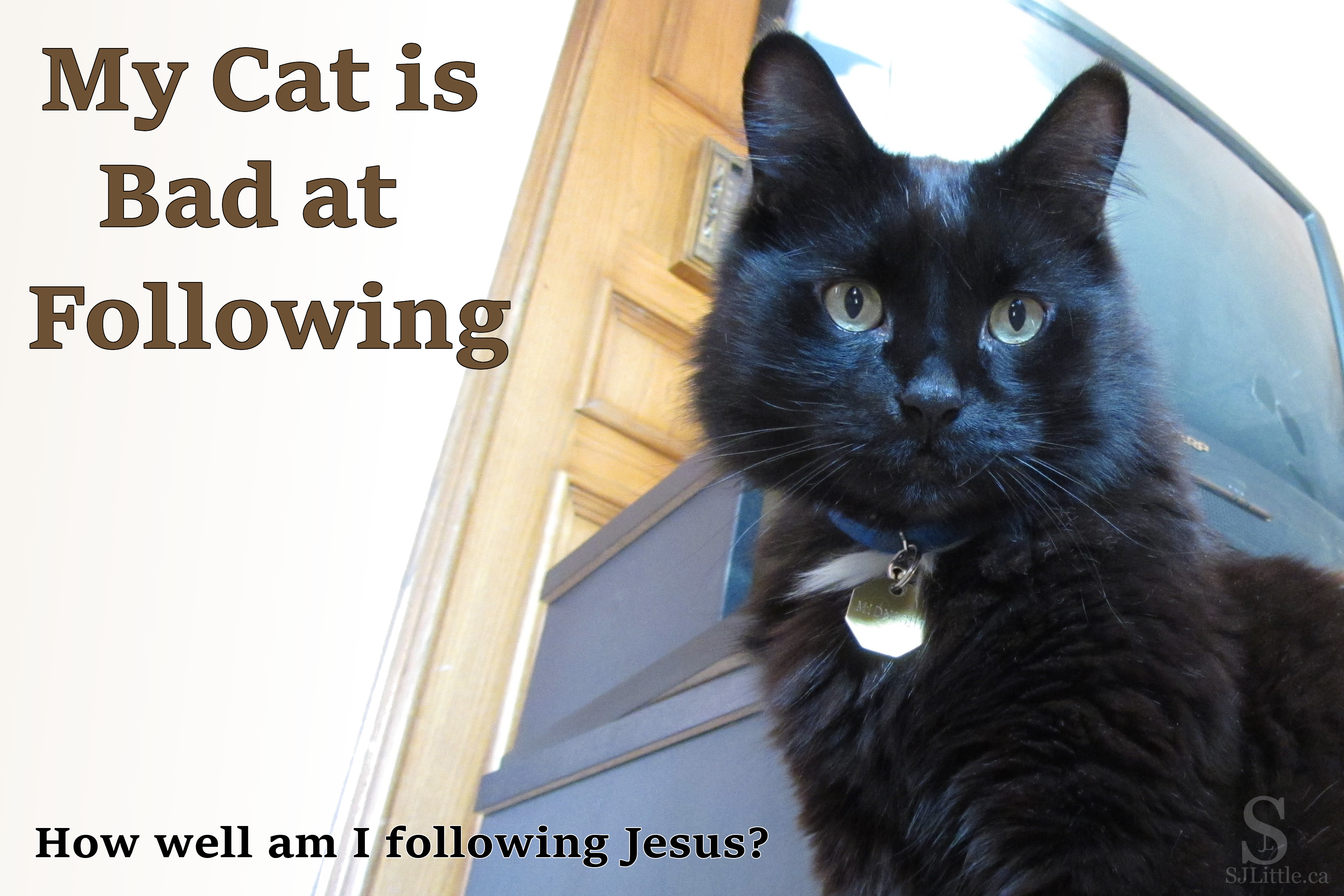 Am I following God, rather than trying to lead Him? My cat isn't good at following me! - S. J. Little