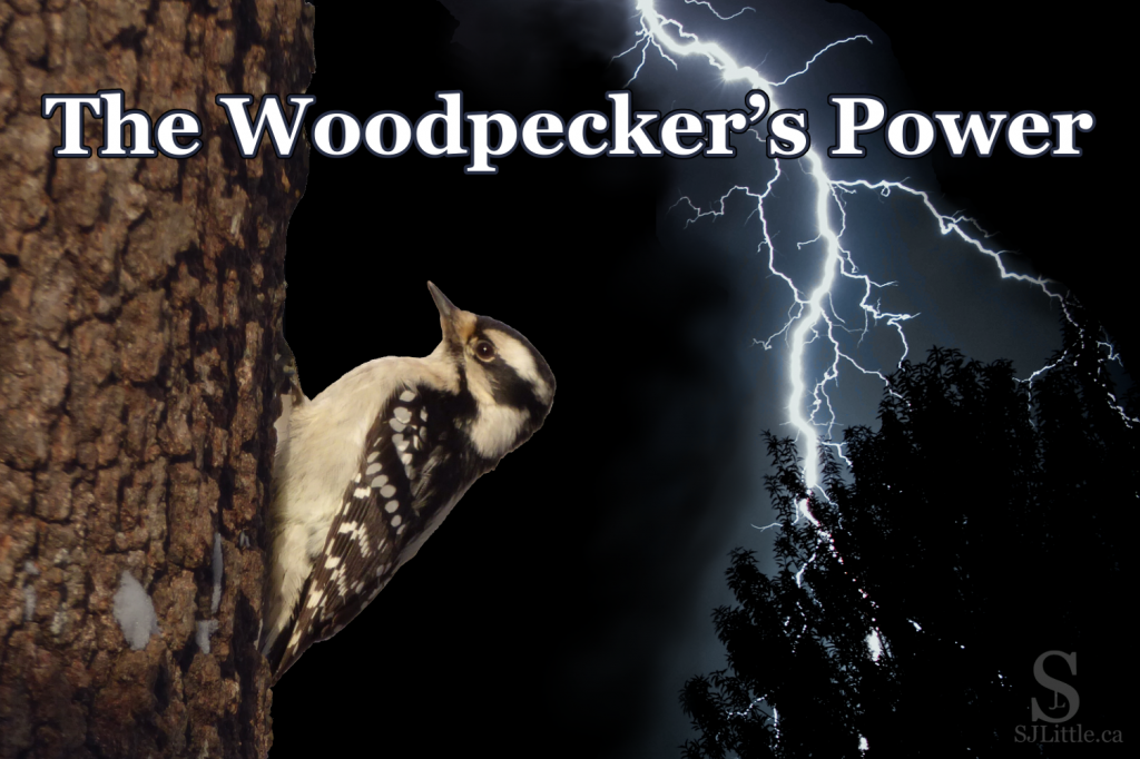 The Woodpecker's Power
