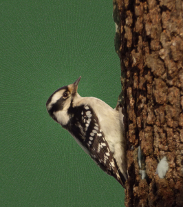 The woodpecker thought it was his own power that split the tree - S. J. Little