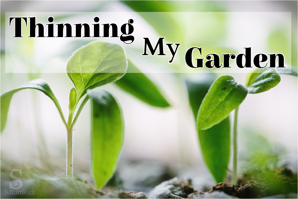 Seedlings and the title: Thinning My Garden