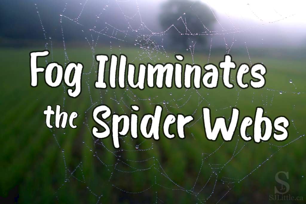 Fog Illuminates the Spider Webs