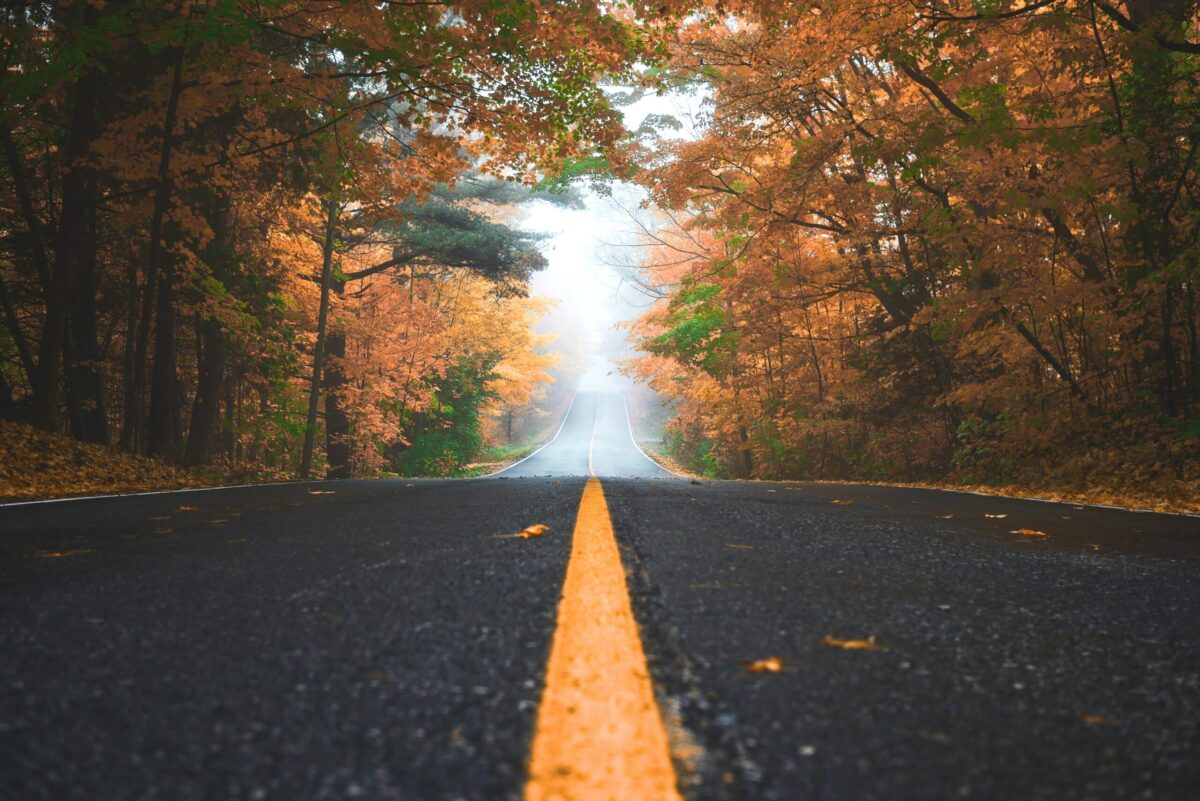 Road leading into fog in forest with orange leaves