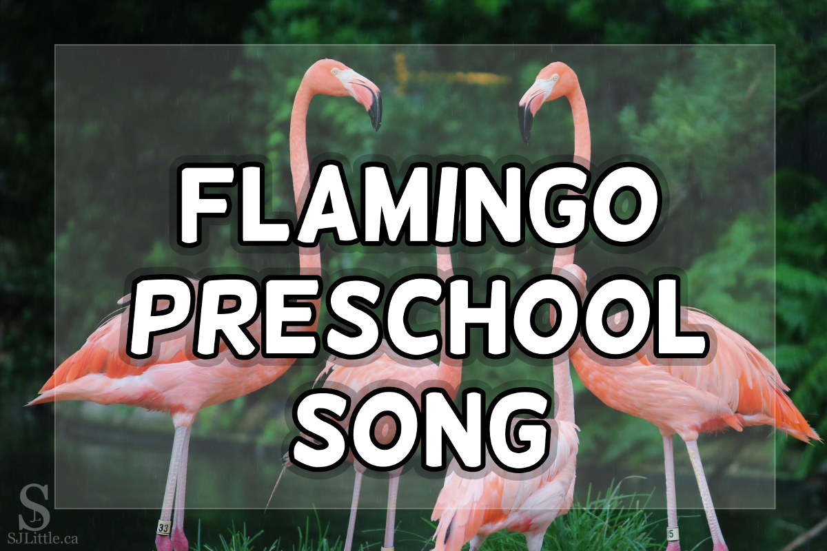 Flamingos behind the title: Flamingo Preschool Song