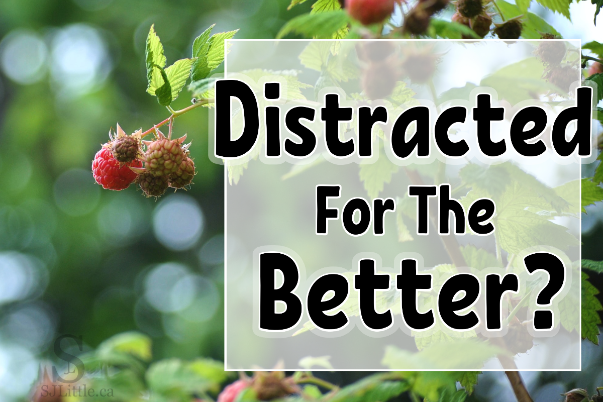 """Raspberry bush behind title """"Distracted for the Better?"""""""